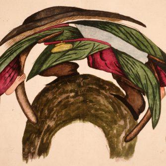 Anamorphose attribuée à Gaudemont.