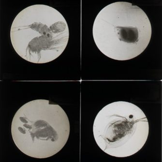 Photographies scientifiques sur plaques verre.