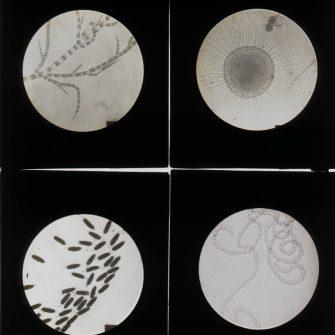 4 photographies scientifiques sur verre.